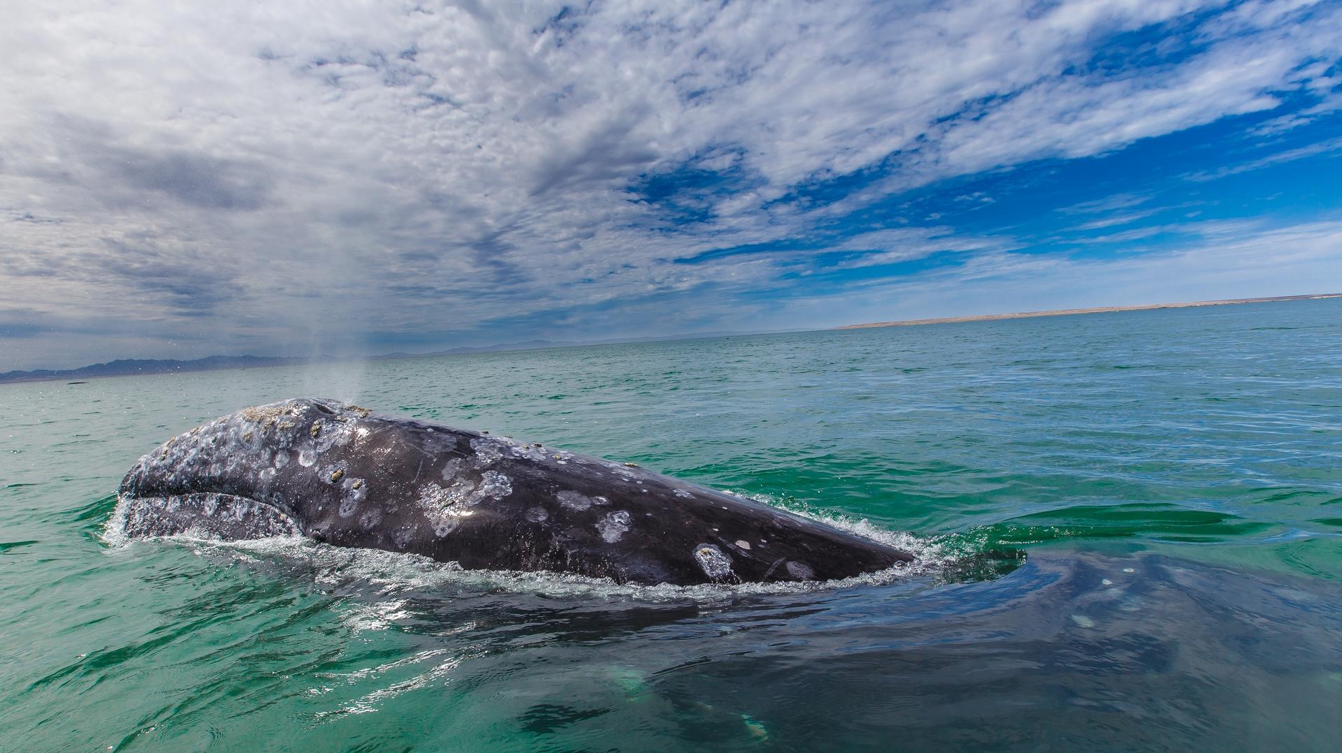 研究證實,船舶噪音與鯨魚的長期壓力有關。照片來源:Gilad Rom(CC BY-NC 2.0)