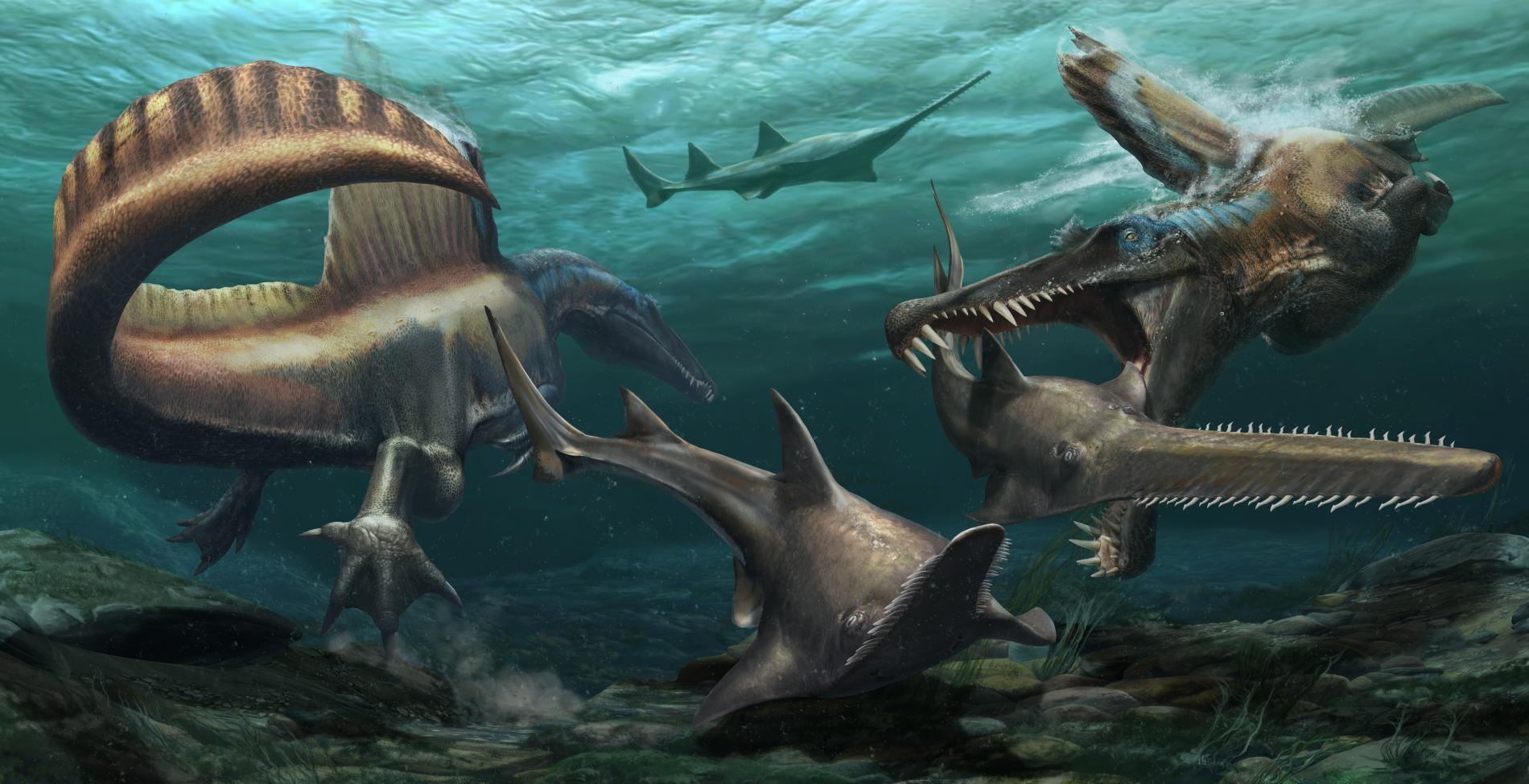 超過9500萬年前,摩洛哥曾經覆蓋著廣闊的河川系統,圖中兩隻埃及棘龍在這片水域中獵捕帆鋸鰩(Onchopristis),一種史前鋸鰩。新發現的化石說明這種恐龍的尾部相當適合游泳──這項特徵支持棘龍大部分時間都待在水中的假設。 JASON TREAT, NG STAFF; MESA SCHUMACHER. ART: DAVIDE BONADONNA NIZAR IBRAHIM, UNIVERSITY OF DETROIT MERCY