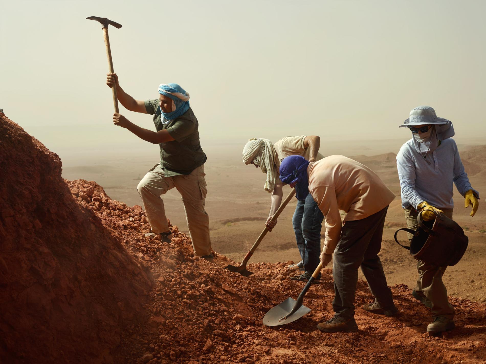 工作人員揮舞著鐵鏟與鋤頭開鑿摩洛哥茲里加(Zrigat)發掘現場,古生物學家尼札.伊布拉希姆(Nizar Ibrahim)和同僚們已經在此地發掘出了棘龍骨骸。 PHOTOGRAPH BY PAOLO VERZONE, NATIONAL GEOGRAPHIC