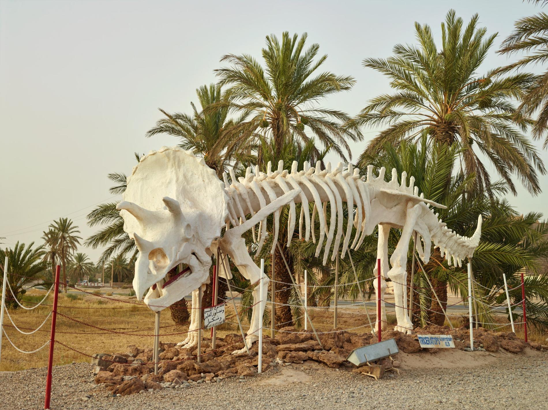 摩洛哥里薩尼(Rissani)附近塔希里化石博物館(Tahiri Fossil Museum)外的三角龍雕像,這是發現於北美洲的物種。摩洛哥雖然有自己的恐龍,牠們的知名度卻不及美洲遠親。PHOTOGRAPH BY PAOLO VERZONE, NATIONAL GEOGRAPHIC