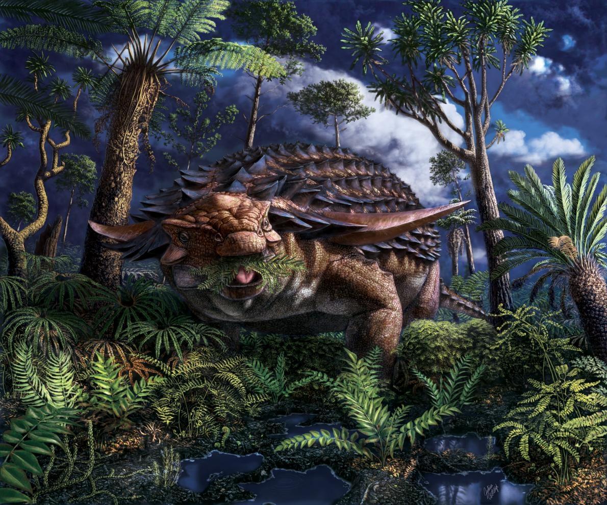 大約1.1億年前的亞伯達省西北部,一隻馬氏北方盾龍(Borealopelta markmitchelli)在野火甫滅的地景中吃著羊齒植物。一篇關於牠胃部內容物的新研究提供了這些植物的細節。 ILLUSTRATION BY JULIUS CSOTONYI