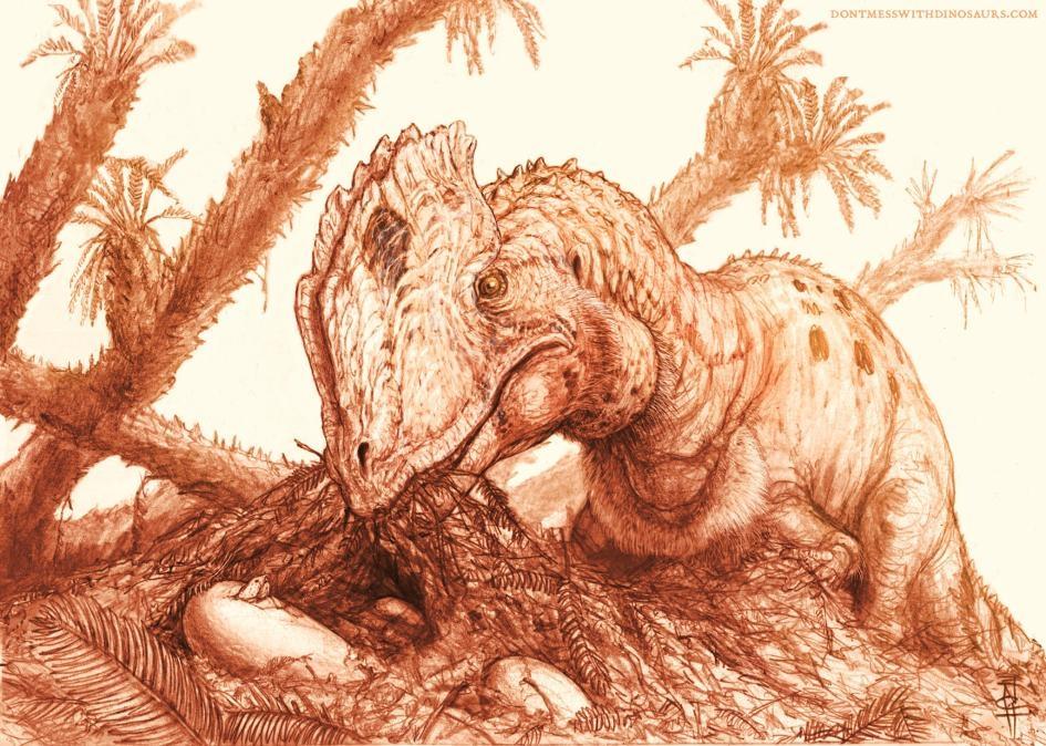 這幅重建圖顯示一隻成年魏氏雙脊龍(Dilophosaurus wetherilli)正在照料一窩孵化中的蛋。 ILLUSTRATION BY BRIAN ENGH