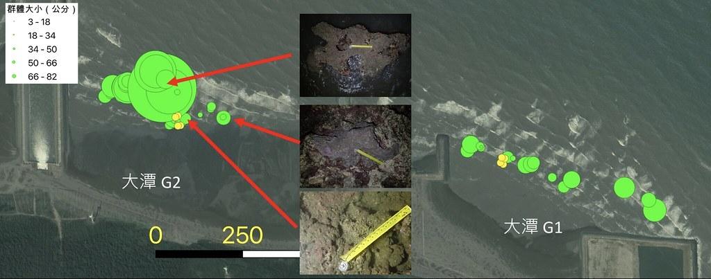 研究團隊在有限的觀測範圍中觀察到水深愈深的地方珊瑚群體就可以長到愈大。圖片來源:陳昭倫團隊提供。
