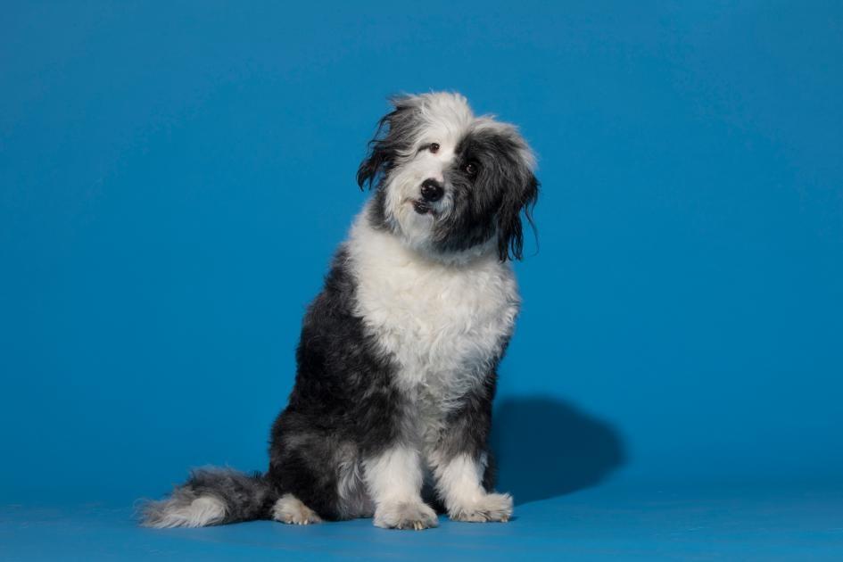 狗已經和人類一起演化了1萬年,對人類的情緒特別敏感。PHOTOGRAPH BY MARK THIESSEN, NAT GEO IMAGE COLLECTION
