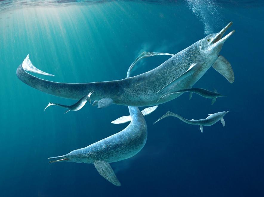 這幅插圖描繪一群屬於魚龍目(Ichthyosauria)之下的貝薩諾龍(<i>Besanosaurus</i>),而魚龍是一類和海豚與鯨魚有些相似的遠古海洋爬行動物。一篇新研究揭示一隻貝薩諾龍的近親貴州魚龍(<i>Guizhouichthyosaurus</i>)的化石保存了這隻動物的最後一餐。 ILLUSTRATION BY FABIO MANUCCI