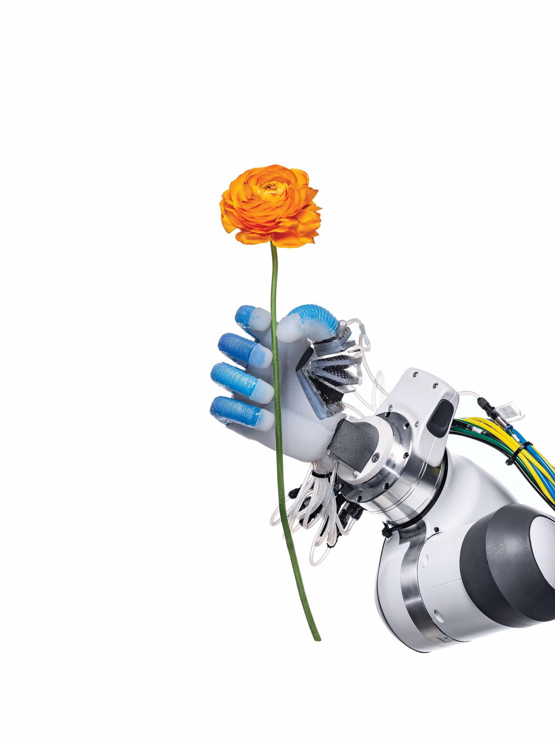 柏林工業大學的機器人學與生物學實驗室裡,一條機器人手臂用它的氣動式手指穩穩而輕巧地拈著一朵花。近年的進展讓機器人的能力比以往更接近人類。Photo by SPENCER LOWELL(史賓賽.羅威爾)
