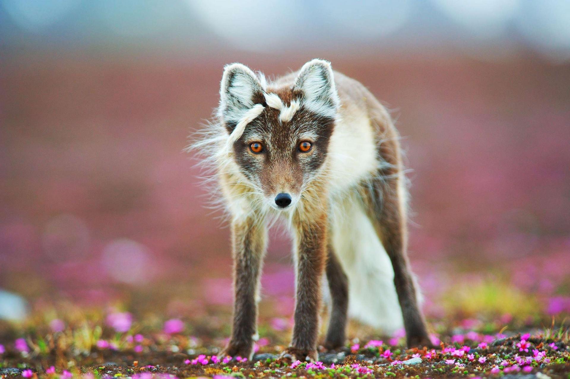 Photograph by Bjorn Anders Nymoen