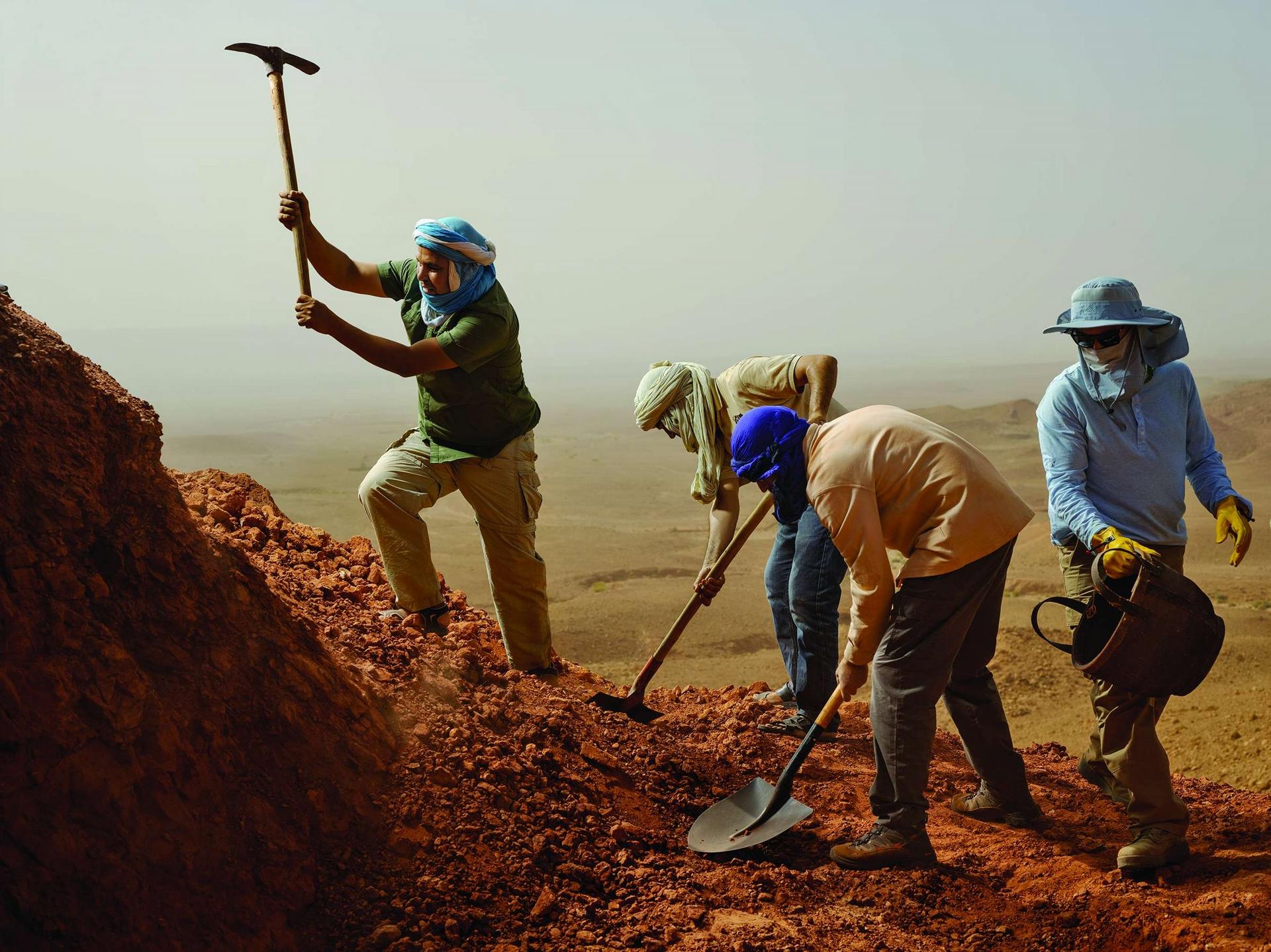在摩洛哥的撒哈拉沙漠,鐵鍬與尖鋤此起彼落地飛舞著,一群古生物學家、學生和專業挖掘者正在尋找埃及棘龍的化石。在這個地點找到的骨頭顯示,棘龍的尾部可以在水中推動前進,這是第一次在大型食肉恐龍身上發現這個特徵。攝影:保羅.維佐尼 PAOLO VERZONE