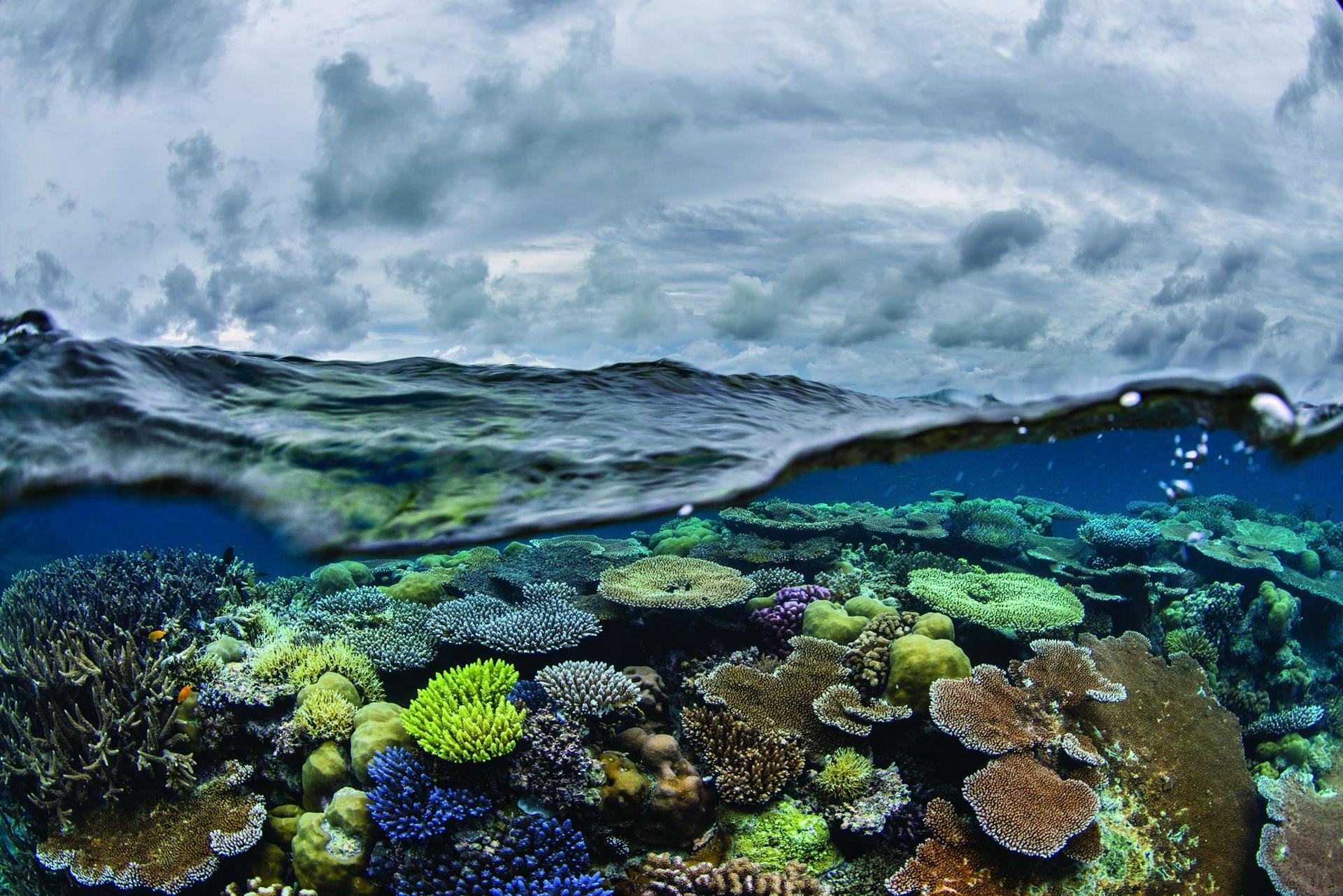 在帛琉近海的風暴海面下,生長著種類豐富、欣欣向榮的珊瑚。這個小島國以設置禁漁區的方式,保護了80%的水域──是世界上受保護海洋占領土比例最高的。其餘20%的水域只有帛琉人可捕撈。攝影:安立克.薩拉 ENRIC SALA