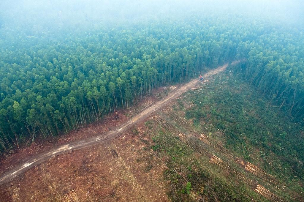在野火霧霾中的蘇門答臘雨林。圖片來源:CIFOR(CC BY-NC-ND 2.0)