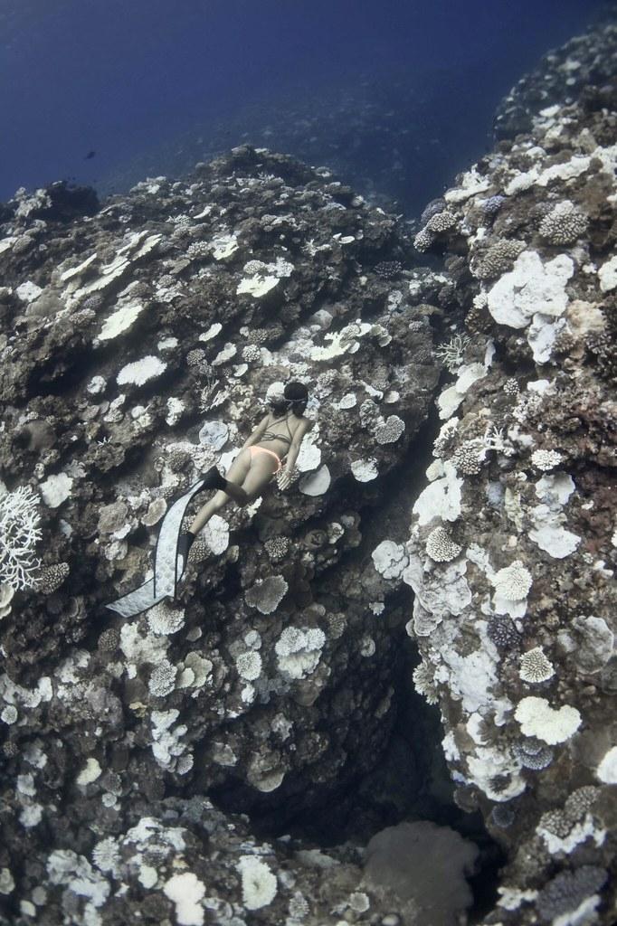今年蘭嶼紅頭村森林步道附近珊瑚白化情形。圖片來源:潛行者小寶教練