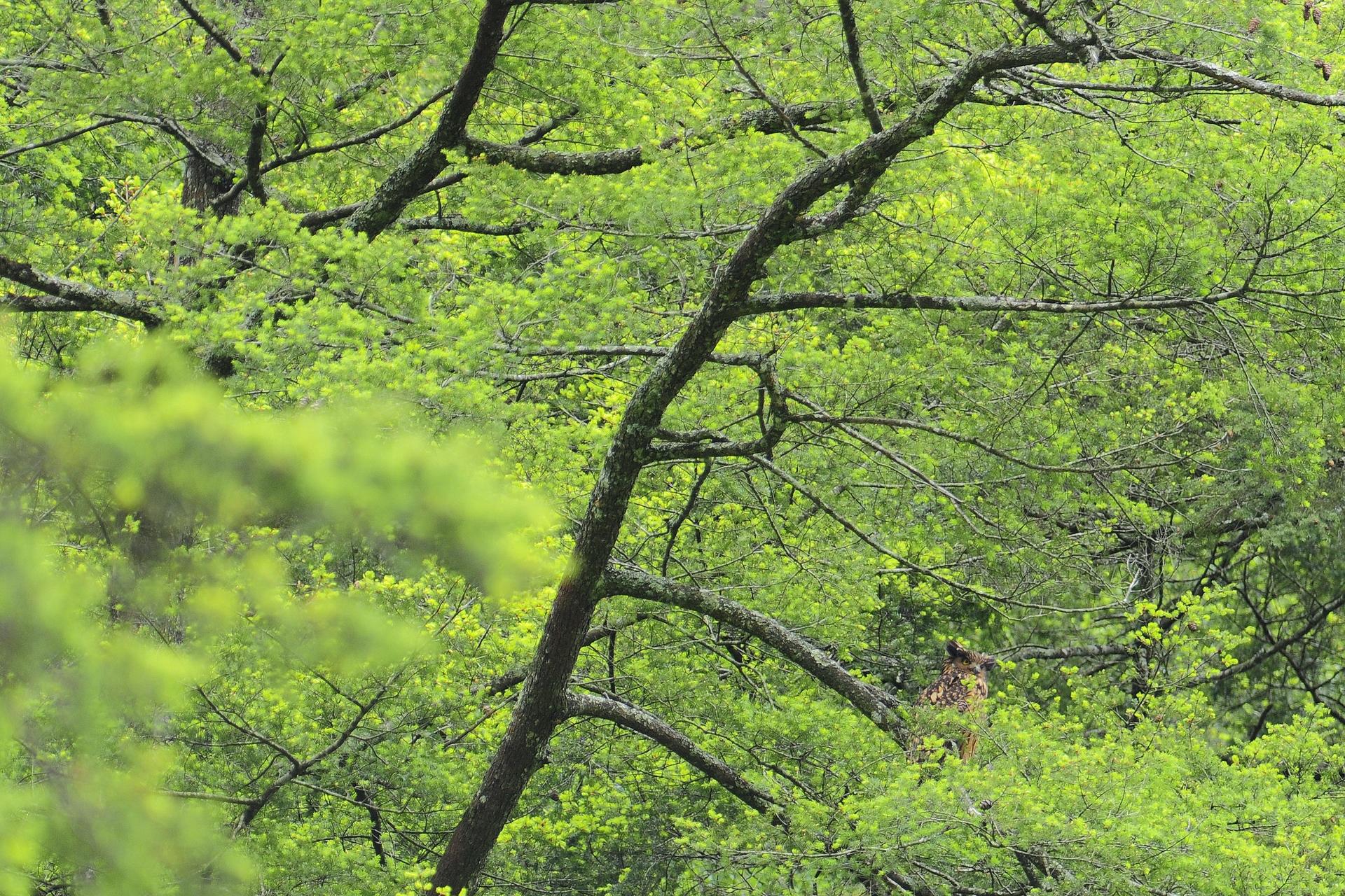 繁殖期間在巢邊守護的親鳥(攝影:謝季恩)