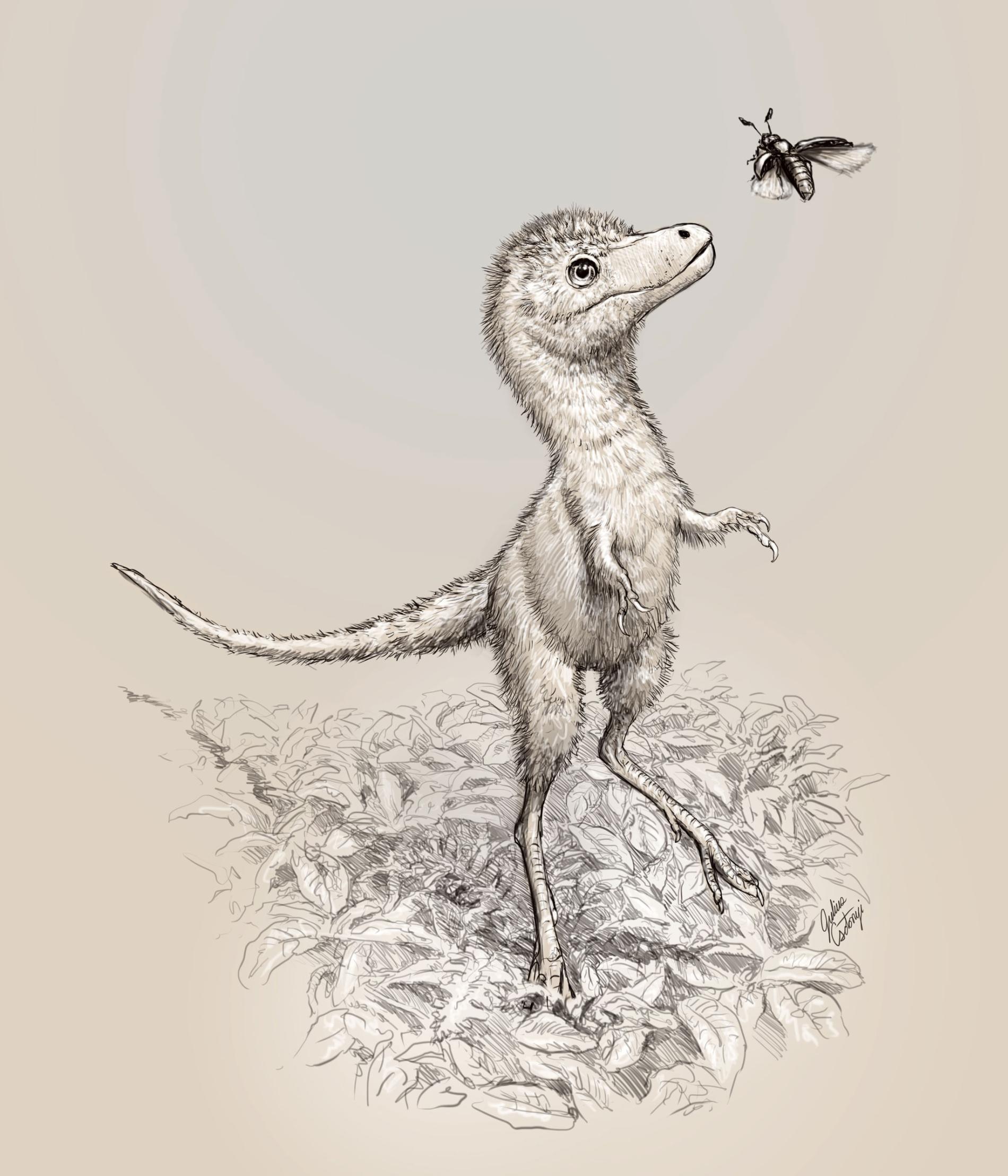 插圖描繪霸王龍(Tyrannosaurus rex)幼雛可能的樣貌。最近獲得描述的胚胎化石並不屬於霸王龍這個物種,而是較早的暴龍屬恐龍,詳細物種尚待辨認。 ILLUSTRATION BY JULIUS CSOTONYI
