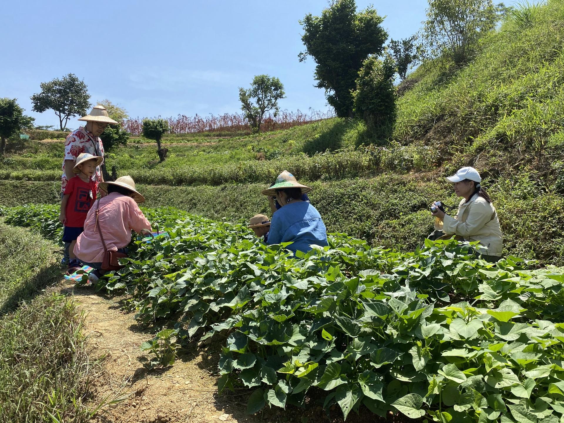 豐富自然環境的香格里拉休閒農場,可體驗穿梭在包羅萬象的植物蔬菜農園裡摘採。