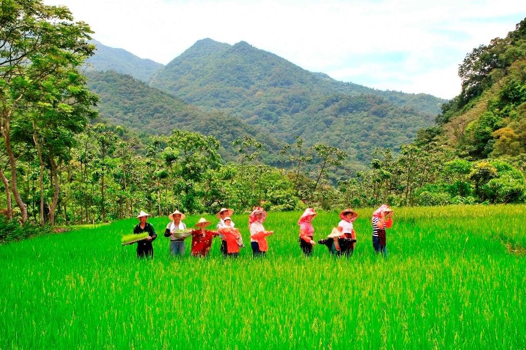 頭城農場體驗有機菜園農事和插秧的農村樂活。