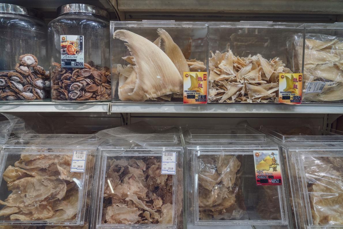 乾魚翅會在新加坡分級以便出售。當地是魚翅交易的中心。