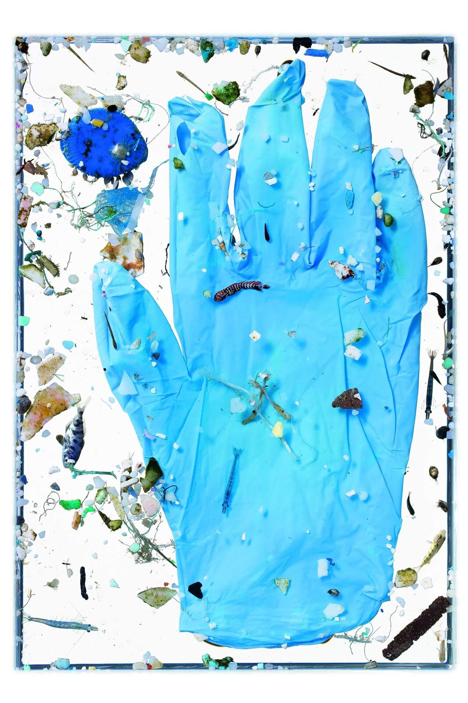 這只藍色手套在水裡的時間還不夠久,不像多數的海洋塑膠會在海浪和陽光的影響下分解成碎片,也就是微塑膠。大拇指下方的仔魚是玉鯧,位於食指底部身上有條紋的是鬼頭刀。攝影:大衛.李特舒瓦格 David Liittschwager,攝於夏威夷凱魯瓦NOAA太平洋島嶼漁業科學中心的臨時野外實驗室。