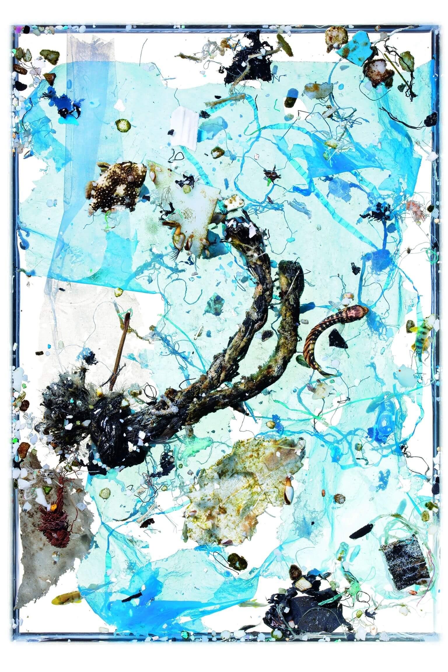 這份海水樣本中,藍色塑膠袋已開始分解;兩條扭曲變形的漁網繩頭讓藻類和其他生物聚集其上;一條體長不到5公分帶有斑紋的鬼頭刀仔魚(中右)轉身游離繩子;一條2.5公分長的鱗魨則游向一塊三角形白色塑膠碎片,這隻鱗魨約十週大,差不多到了返回礁石的年紀。攝影:大衛.李特舒瓦格 David Liittschwager,攝於夏威夷凱魯瓦NOAA太平洋島嶼漁業科學中心的臨時野外實驗室。