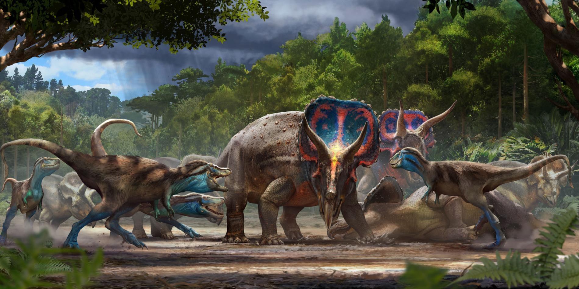 決鬥恐龍的化石可能呈現出一隻三角龍與一隻霸王龍亞成體之間的致命爭鬥,上圖是藝術家重建出的史前美國蒙大拿州。 ILLUSTRATION BY ANTHONY HUTCHINGS
