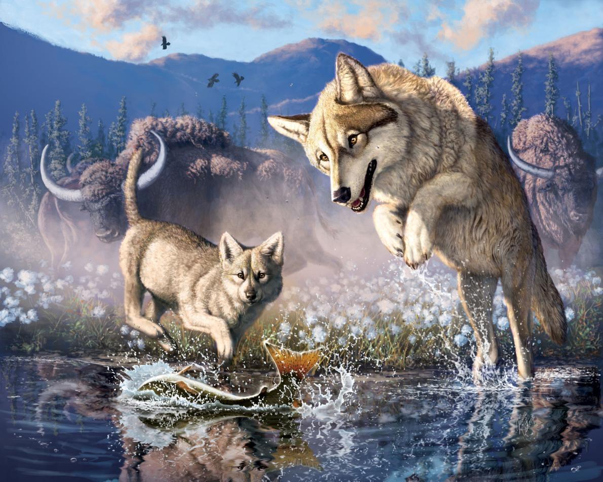 插圖描繪一隻灰狼和牠的幼崽在將近6萬年前的加拿大西北部捕魚。ILLUSTRATION BY JULIUS CSOTONYI