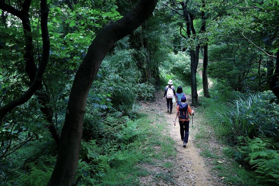 光明稜線是東西向的步道,可以接往更多條鶯歌步道。