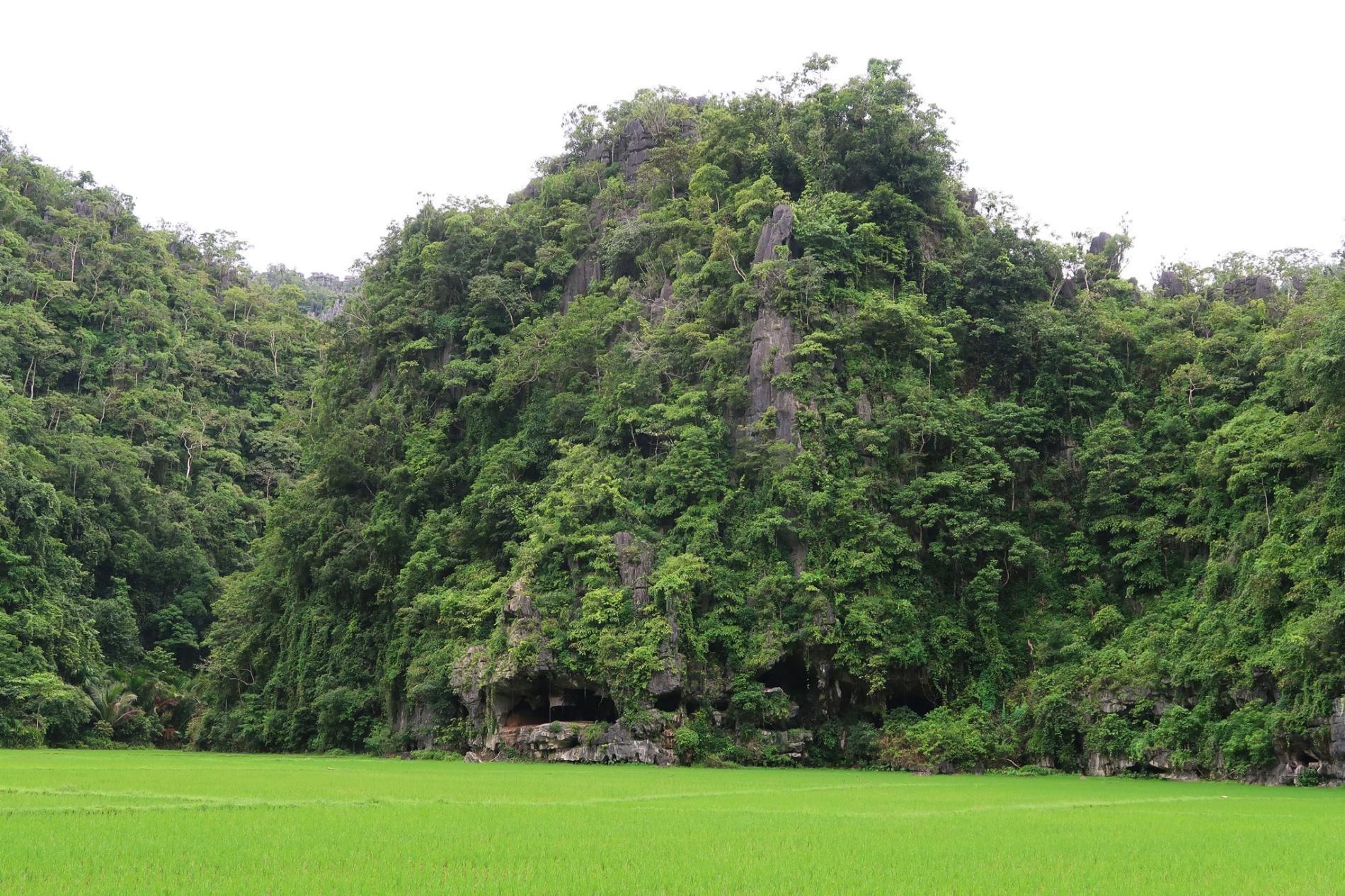 這幅最古老的疣豬壁畫所在的洞穴Leang Tedongnge位於由高聳岩石峭壁所環繞的繁茂谷地邊緣。AA OKTAVIANA