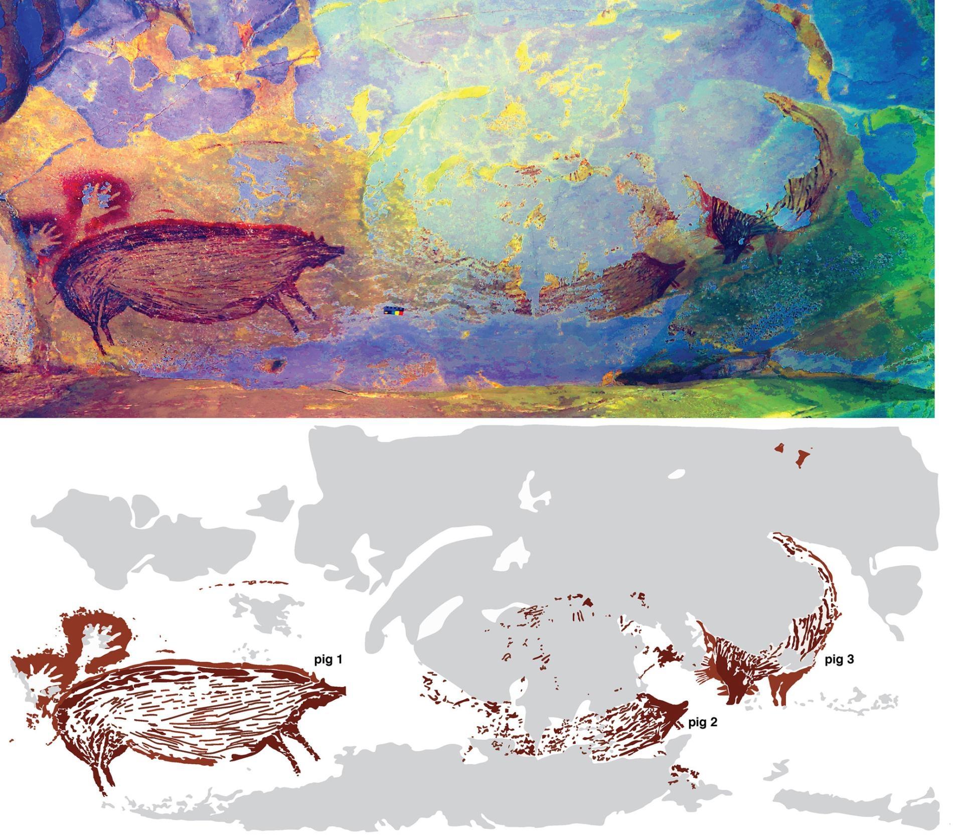 這幅洞穴壁畫可能描繪著數隻疣豬互動的場景。但是侵蝕作用已經帶走了兩頭或可能三頭豬的大部分身體,使得科學家難以辨識原圖描繪的切確畫面。AA OKTAVIANA