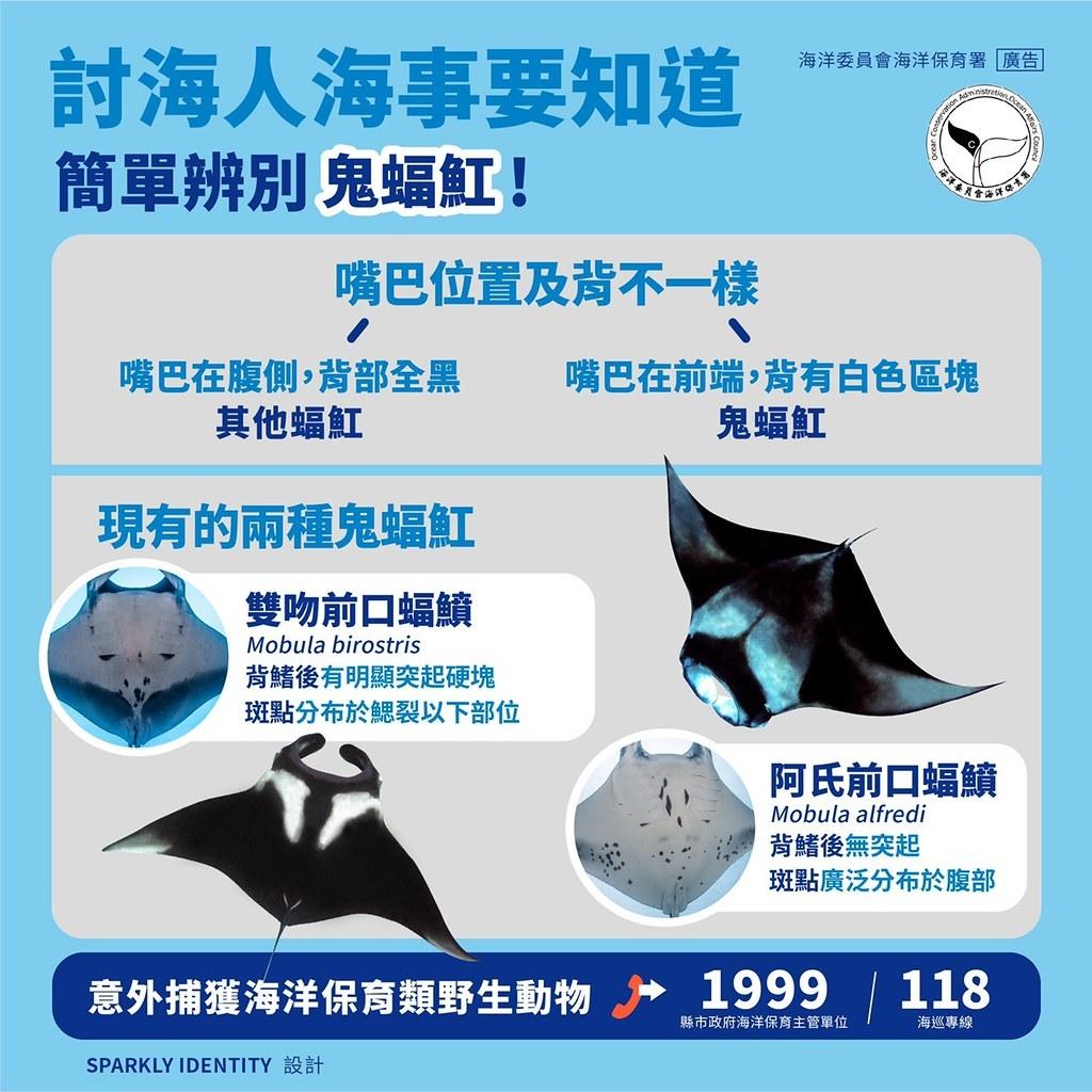 蝠鱝屬兩種魚類都已列入我國保育類物種,海保署提供辨識圖。圖片來源:海洋保育署
