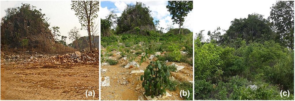 位於泰國北部南邦府的石灰岩礦場,成功恢復過去森林樣貌。圖片來源:Siam Cement Group and SE