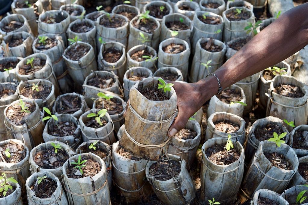 科學家提出造林十大黃金守則。照片來源:邱園