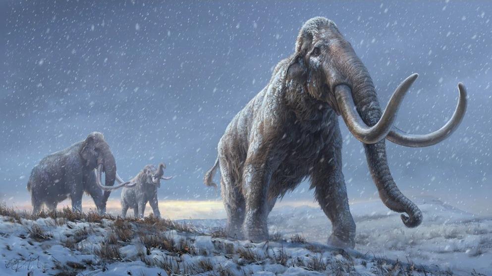 100萬年前,西伯利亞的草原猛瑪象帶有許多適應低溫的基因,較晚期的真猛瑪象族群因這些基因而得以茁壯。這幅重建圖的基礎是從科學家曾定序過最古老的DNA中新獲取的知識。ILLUSTRATION BY BETH ZAIKEN, CENTRE FOR PALAEOGENETICS