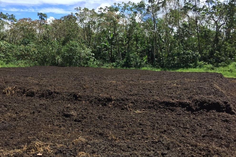 土地上堆積著一層新添加的咖啡果渣,這裡原本已經被外來的牧草佔領。PHOTOGRAPH BY REBECCA COLE