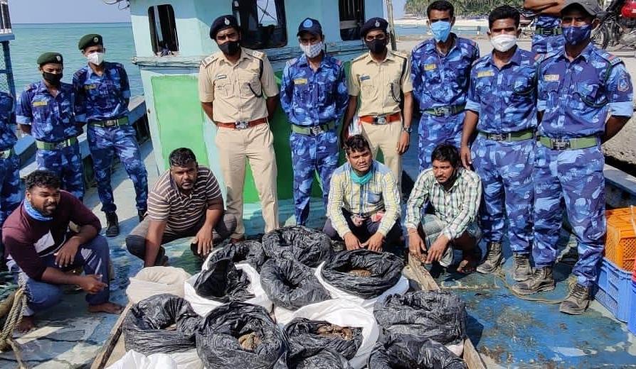 印度政府在拉克沙群島上破獲大型走私行動,共查獲486條海參,7人被捕。照片來源:印度環境、森林與氣候變遷部推特