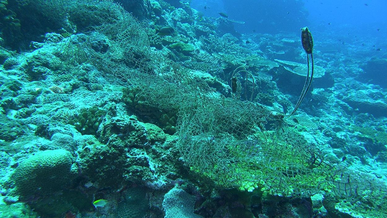 全球海底有 10 萬張以上廢棄漁網,常纏繞在珊瑚礁盤上、纏住許多海洋生物,破壞生態。 圖│鄭明修
