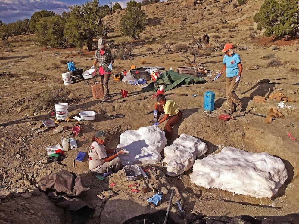 彩虹與獨角獸礦場中的暴龍化石被包裹在層層泥灰與麻布底下,以備運送至猶他州卡納布(Kanab)的帕里亞河區(Paria River District)古生物實驗室。PHOTOGRAPH BY ALAN TITUS, BLM
