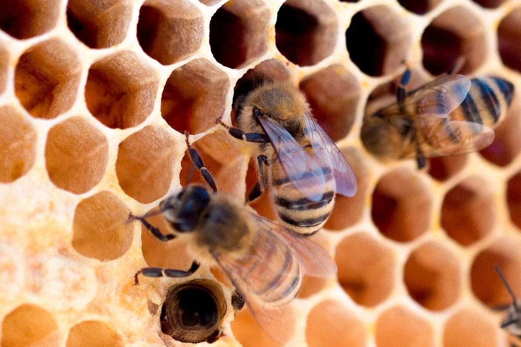 每年出售的蜂蜜總量超過了現有蜜蜂族群的生產能力。據估計,全球約有1/3的進口蜂蜜可能是假蜜。照片來源:Meggyn Pomerleau/Unsplash