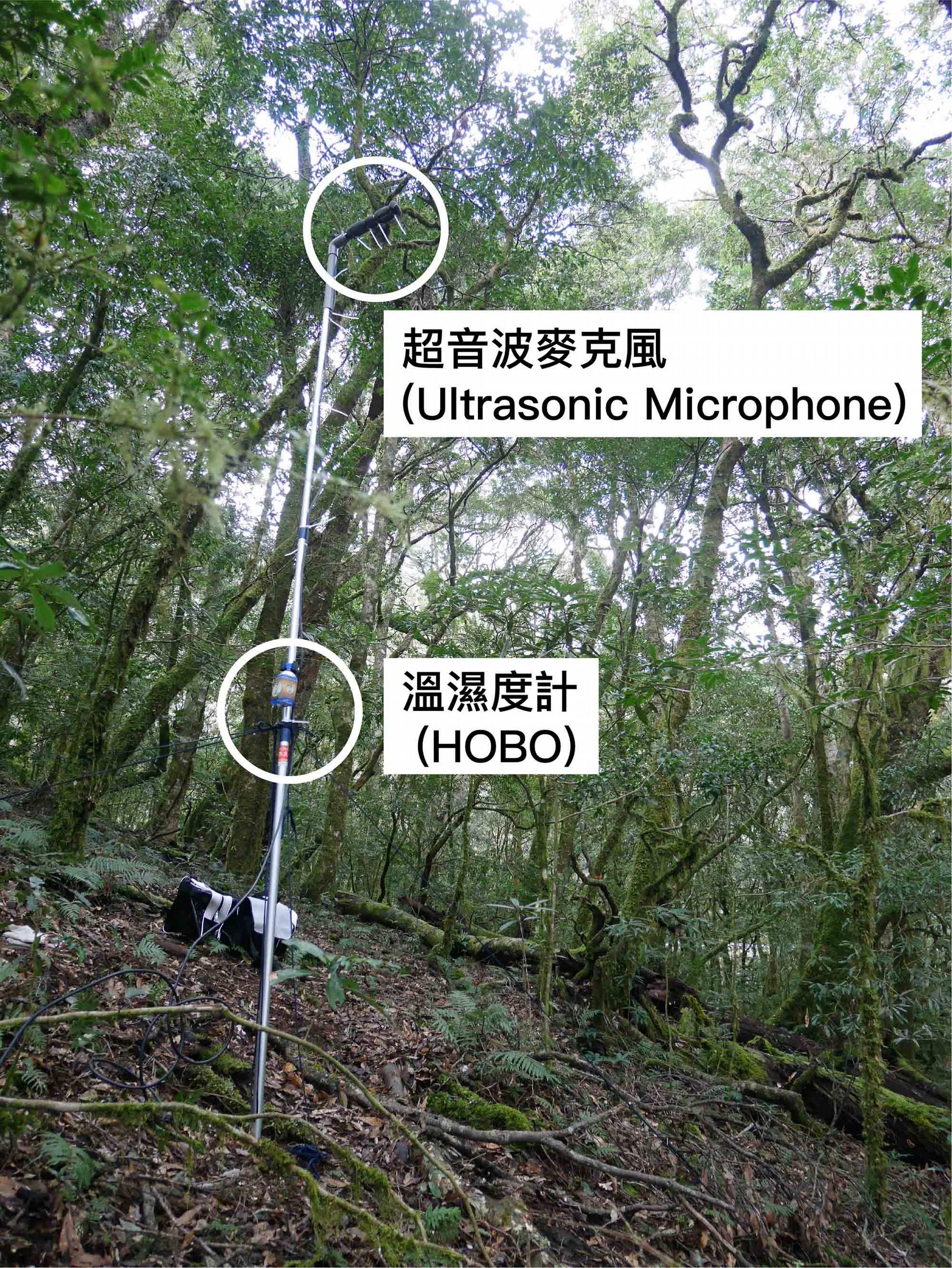 收錄蝙蝠聲音的超音波麥克風 (Ultrasonic Microphone) 與溫濕度計 (HOBO)。 圖│端木茂甯、李佳紜