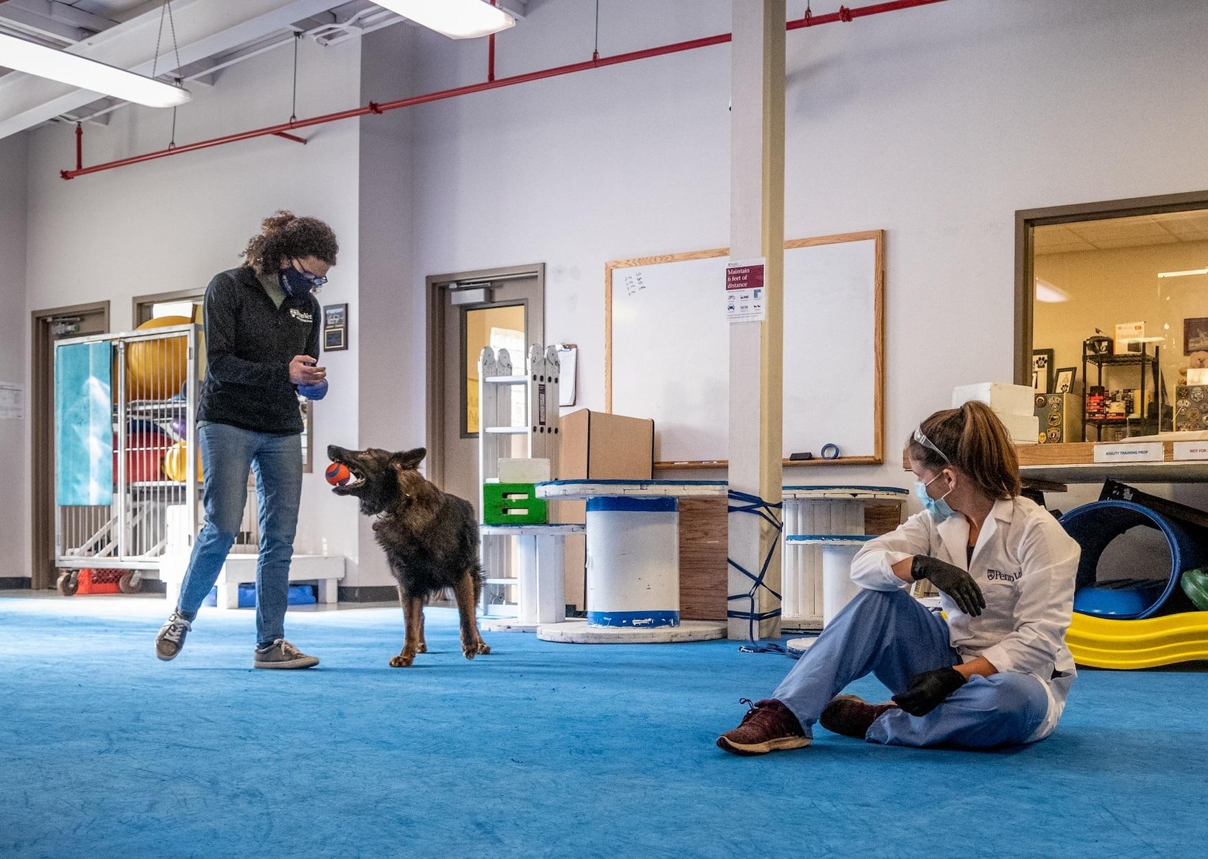 工作犬中心的主任辛西婭.奧托正在訓練德國牧羊犬瑞科。奧托相信,他們總有一天能訓練狗在機場或體育館等公共場所篩檢人類是否罹患COVID-19。