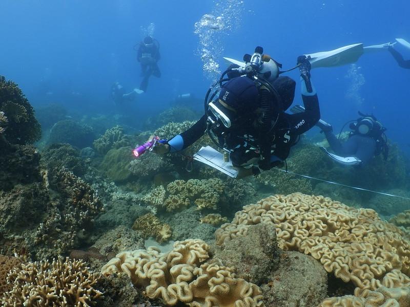 於墾丁後壁湖軟珊瑚區,志工正在搜索無脊椎動物。圖片來源:蘇淮