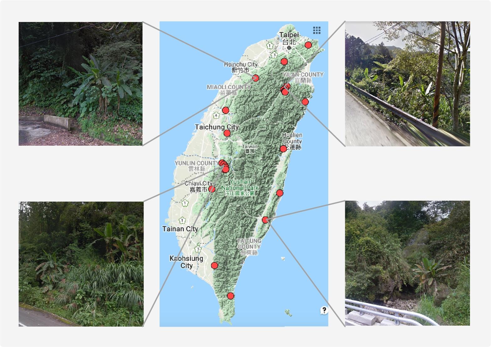 「Google街景」製作芭蕉的分佈網路。(圖/李承叡提供)