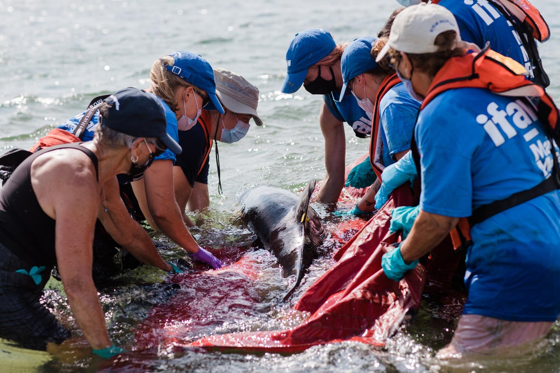 鯨豚擱淺事件層出不窮,「鯨豚擱淺的死因分析」是鯨豚調查局的重要目標。圖/ pexel