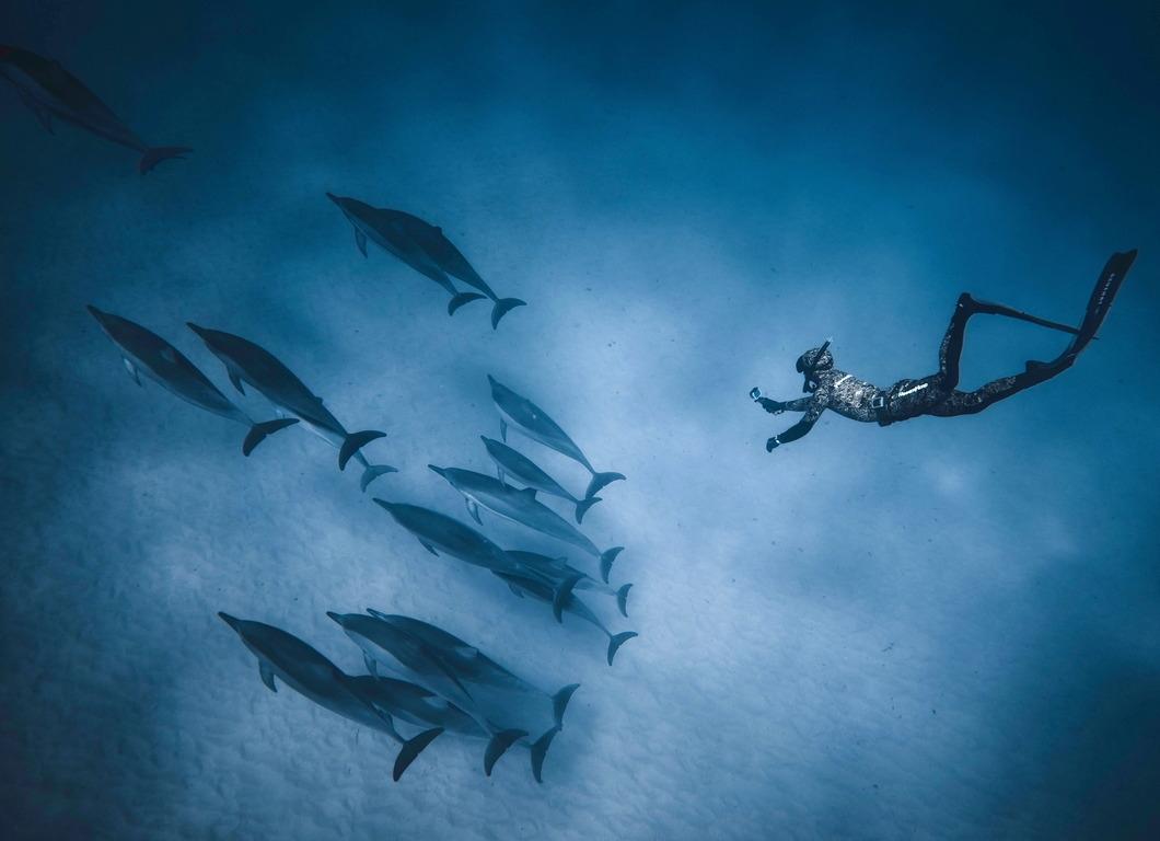 鯨豚保育的初衷為人類與鯨豚「共好」。圖/pexel