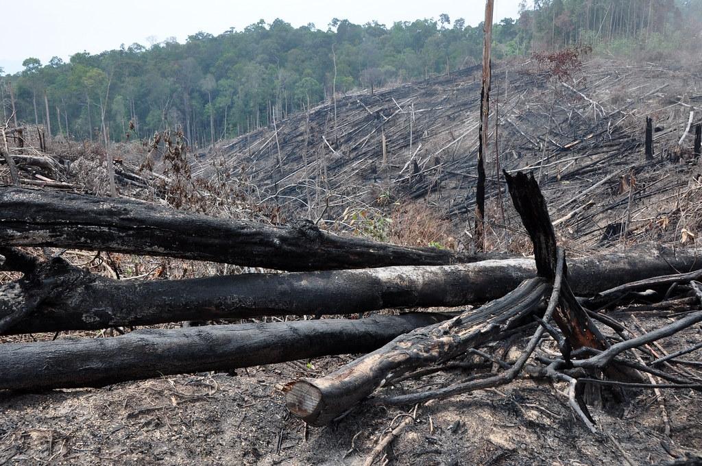 到2019年,每年森林流損總量的42%發生在高海拔地區,森林流損範圍的邊界以每年大約15公尺的速度往上移動。照片來源:Donald Bason/USAID FAB(CC BY-NC 2.0)