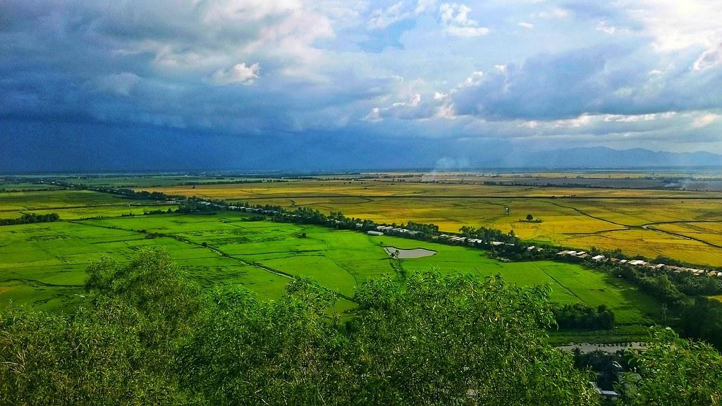 越南湄公河三角洲的稻田。照片來源:Max Pixel