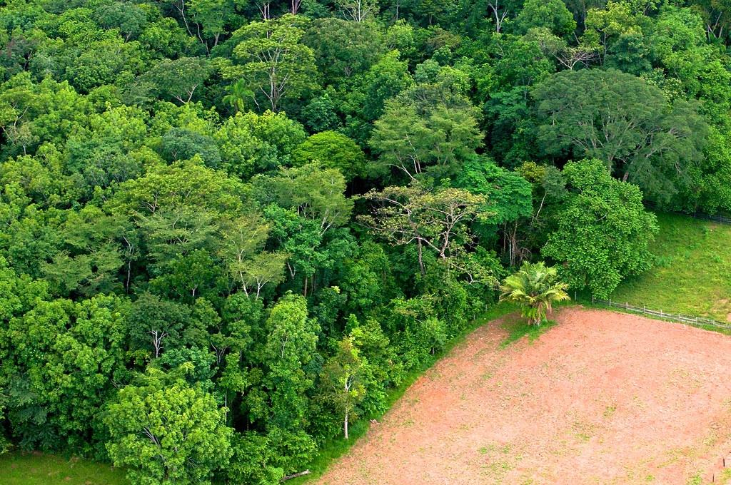 巴西一處森林被轉作農業地。圖片來源:CIFOR(CC BY-NC-ND 2.0)
