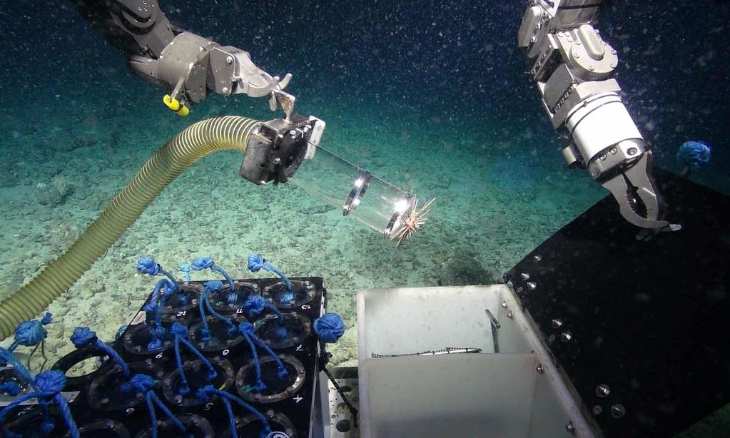 普利茅斯大學的科學家在深海發現了,含有能夠殺死超級細菌的海綿。照片來源:NERC/Deep Links Project/Plymouth University/Oxford University/BGS/JNCC