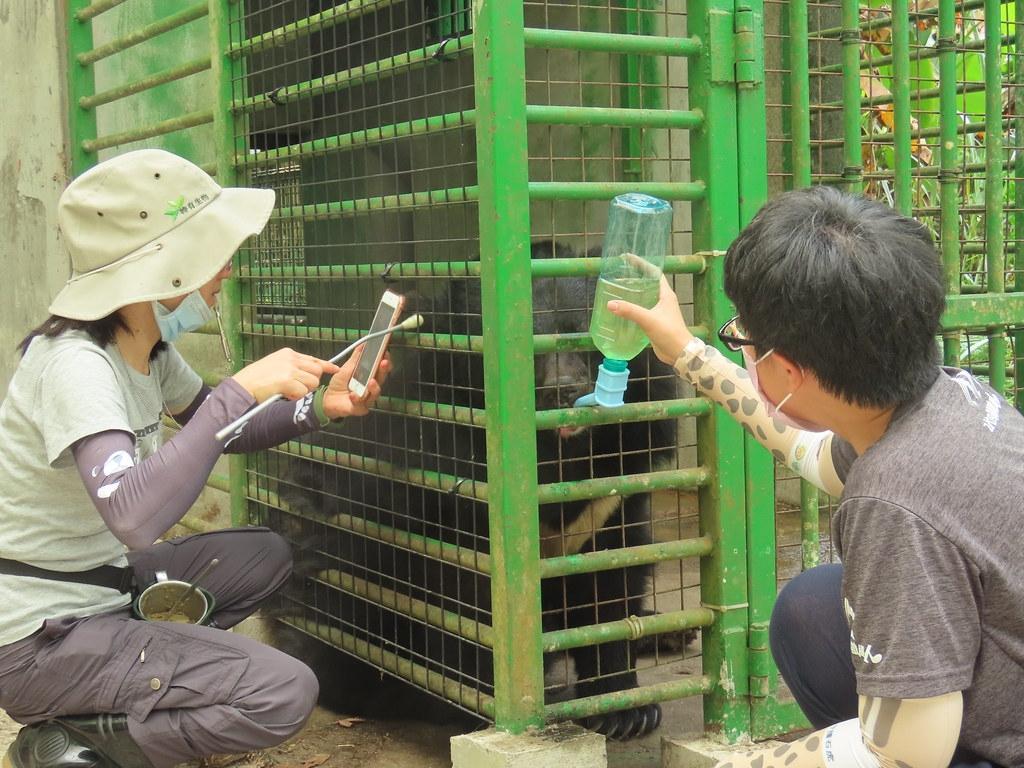 小熊最喜歡蜂蜜水,雖然不好動,敏慧和立雯仍然想辦法讓牠對訓練感興趣。攝影:廖靜蕙