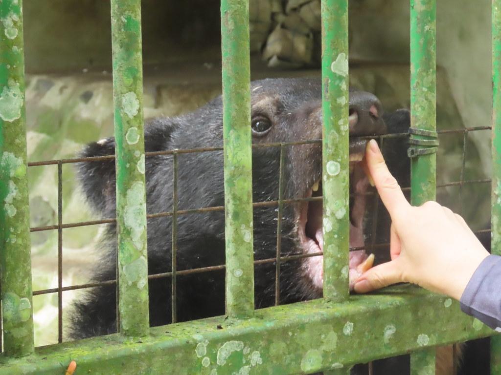 走進特生中心低海拔試驗站,探訪四隻台灣原生黑熊的故事。攝影:廖靜蕙