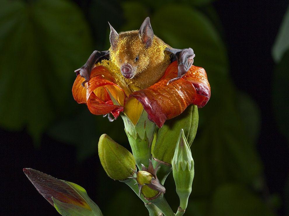 蝙蝠的饗宴