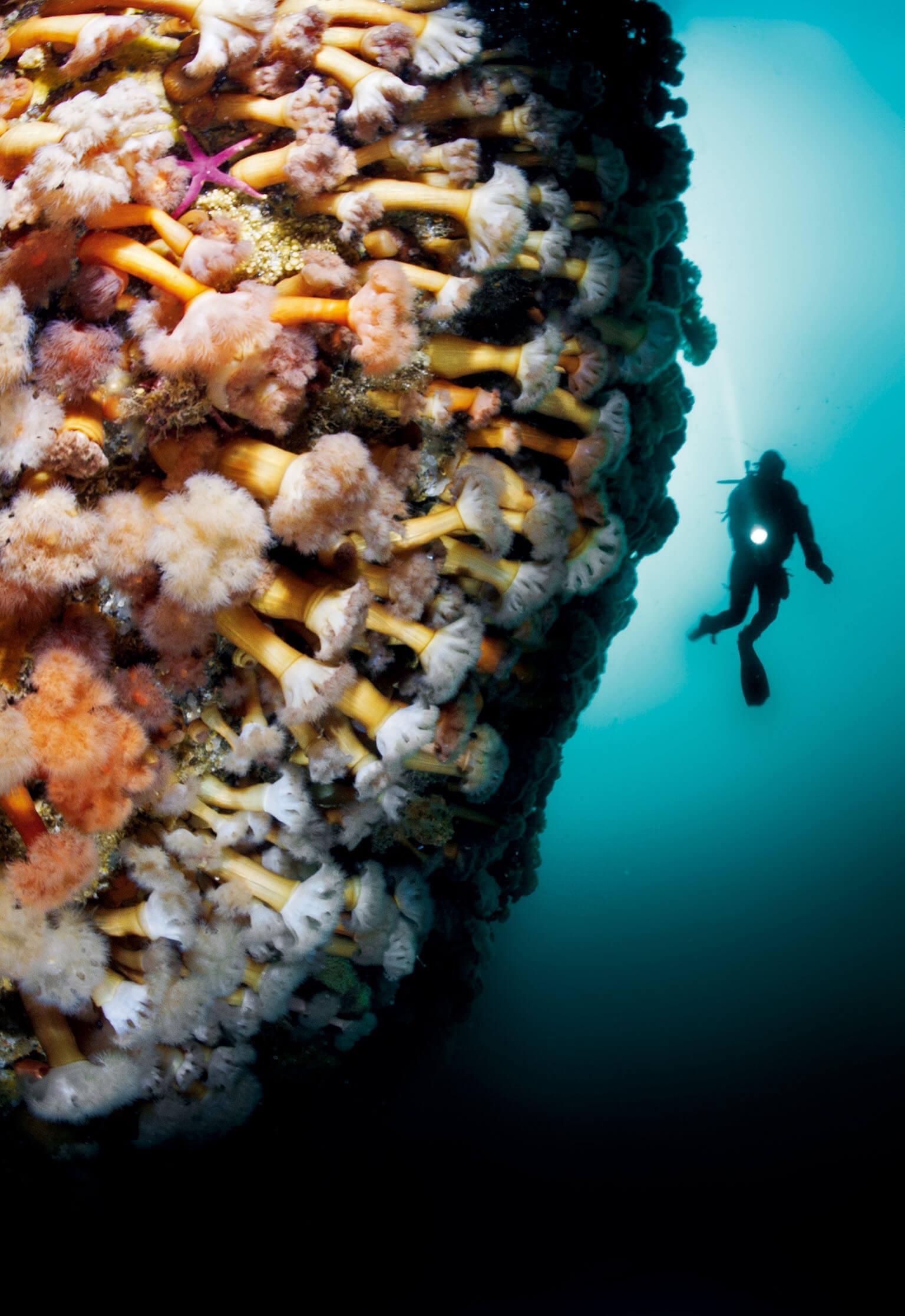 攝影師兼探險家大衛.都必烈自1994年起擔任勞力士的品牌代言人,並為《國家地理》拍攝了將近70篇報導。都必烈在紐芬蘭格羅摩恩國家公園的朋恩灣拍下這面布滿了海葵的峽灣峭壁。 PHOTO: DAVID DOUBILET, NATIONAL GEOGRAPHIC CREATIVE